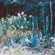 Cacti Garden. Date unknown.