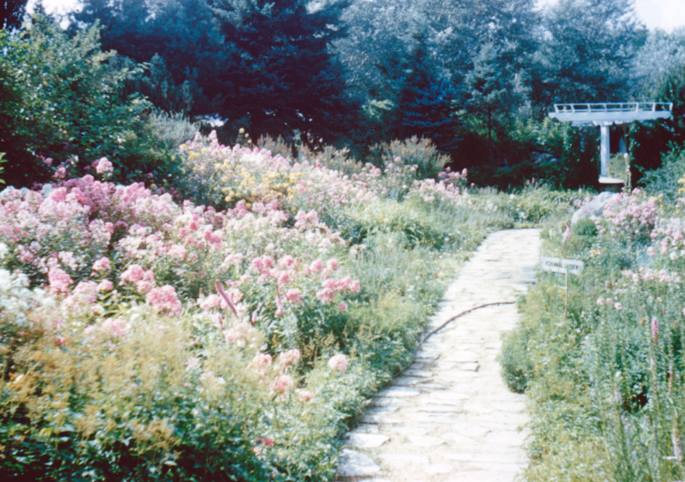 The Perennial Garden. Date unknown.